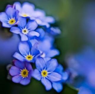Las Flores De Tu Boda Simbologia Y Significado Innovias