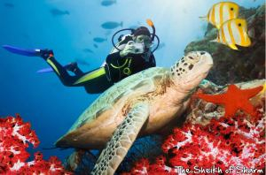 diving-sharm-el-sheikh