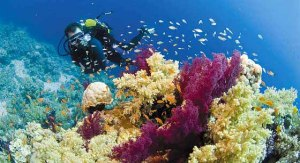 diving-sharm1