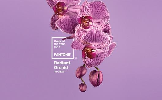 raidant_orchid_2014