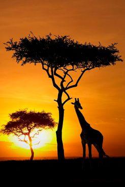 Atardecer de Safari por Kenya. Vía Pinterest.