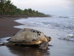 Parque Nacional de Tortuguero. Imagen vista en grandvoyage.com