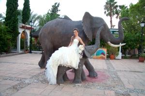 novia elefante