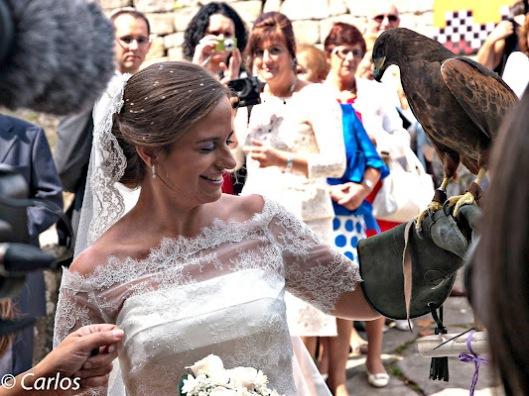 halcon-entregando-anillos
