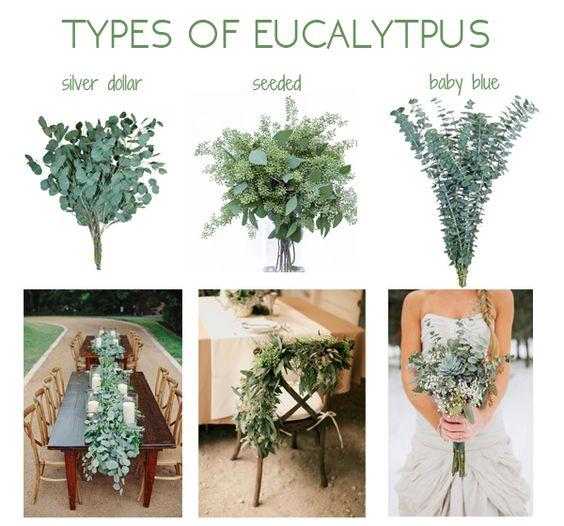 eucalipto-boda