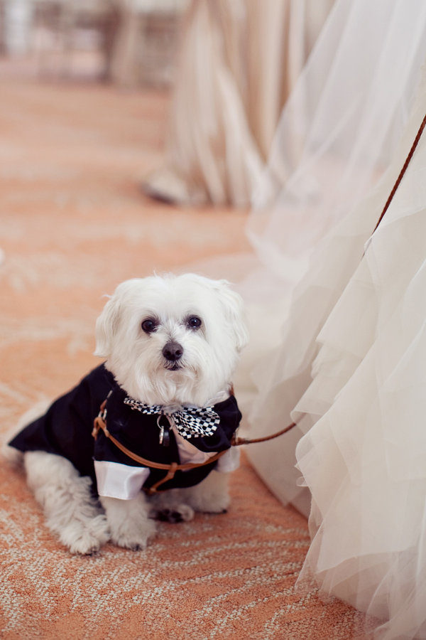 Mascota llevando las alianzas de boda. Foto: Heather Kincaid